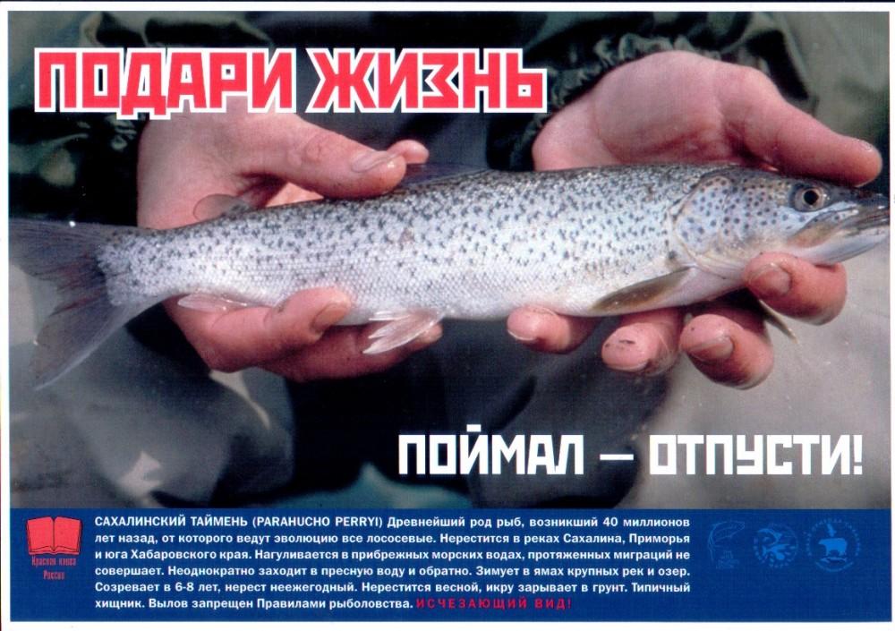 где в россии ловят красную рыбу